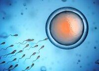 Kiaušialąsčių užšaldymas – galimybė moterims, norinčioms atidėti motinystę ateičiai
