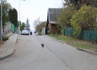 Šnipiškėse atsiras pirmoji bendrojo naudojimo gatvė