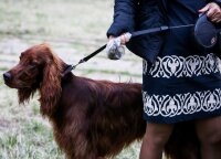 Priminimas šunų šeimininkams: eidami į lauką nepamirškite svarbiausių dalykų