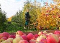 Sodininkai ieško vietos rinkoje – gelbės modernūs sandėliai