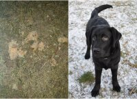 Vilniečiai vos spėjo patraukti šunį nuo užnuodyto maisto: įtaria, kas galėjo taip žiauriai pasielgti