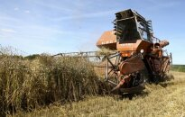 Augalus auginantiems ūkininkams mokslininko įspėjimas