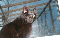 Draugiškiausias ir šauniausias prieglaudos katinas ieško namų!