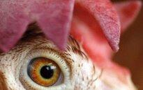 Kai kuriose Europos dalyse išaugo paukščių gripo grėsmė