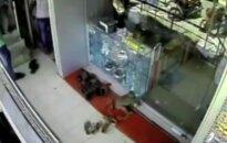Indijoje beždžionė apiplėšė juvelyrinę parduotuvę