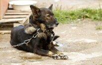 Šunų prieglauda Garliavoje