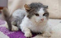 Katinas Murzilka ieško namų