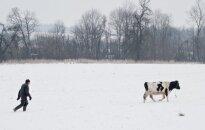 Už galvijų nepriežiūrą žiemą savininkai sulaukia baudų