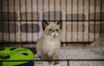 Iš degančio namo išgelbėti kačiukai ieško namų