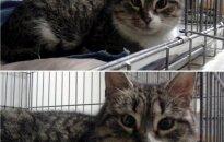 Vilniuje rasta miela katytė