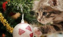 Pati mieliausia kalėdinė reklama, nepaliksianti abejingų VIDEO
