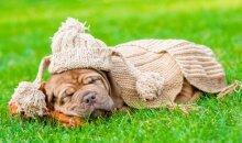 KONKURSAS: mano miegalius šuo FOTO