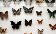 Egzotinių gyvūnų konferencijos atgarsiai: kaip namuose auginti drugelį?