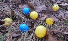 Nustebino radinys pamiškėje: ar Lietuvoje auga spalvoti grybai?