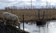Važiavo iš Vilniaus ūkininkauti: žemės nėra, sūnus emigravo