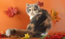 Savaitgalį kviečia kačių paroda