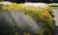 Susipažinkite: įdomios ir retos rudens gėlės