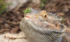 Egzotiniams gyvūnams lietuviai negaili pinigų