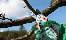 Kokius medžius ir krūmus reikia genėti rudenį?
