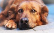 Gyvūnų ženklinimas: ką turi padaryti šeimininkai?