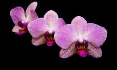 Apie augalus atskleidė tai, kas atrodo neįtikėtina