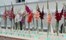 Apsilankymas parodoje Panevėžyje: net 113 kardelių veislių!