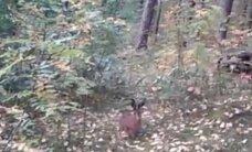 Maloni staigmena: nesitikėjo, kad šie gyvūnai gyvena ir Vilniuje