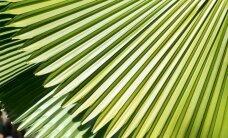 Egzotika namuose – palminiai augalai ir jų priežiūra