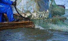 Mokslininkai ištyrė Kuršių marių žuvingumą