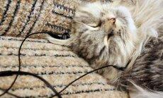 Katės irgi mėgsta klausytis muzikos
