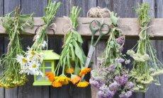 Žolininkės patarimai, kokių augalų reikia turėti namų vaistinėlėje ir kaip jais gydytis