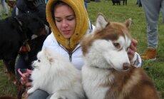 Šunų varžybos