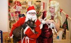 Kalėdų senelis ir snieguolė DELFI redakcijoje