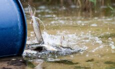 Šį rudenį ruošiamasi įžuvinti labai daug vandens telkinių