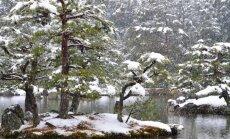 Spygliuočiai: kokius sodinti, kad žiemą puoštų sklypą
