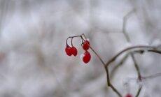 Žiemos nuotraukos