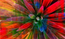 "Augalai, kurie pasaldins gyvenimą <sup style=""color: #ff0000;"">2 dalis</sup>"