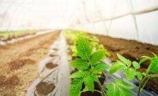 4 vertingi patarimai prieš kimbant į darbus daržuose