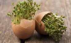 Sumanūs būdai, kaip kiaušinių lukštai gali pasitarnauti jūsų sklype