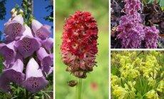 Augalai, kuriuos draudžiama skinti (GRYNAS.lt montažas)