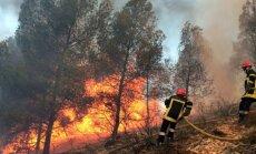 Miško gaisras