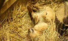 Lietuvos zoologijos sodas savaitgalį švęs garbingą sukaktį