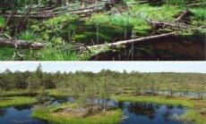 Viešvilės ir Kamanų rezervatai/ Rezervatų nuotr.