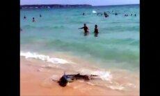Melsvasis ryklys sukėlė paniką Maljorkos paplūdimyje
