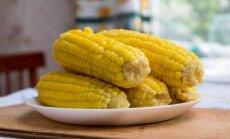 Išvirtos kukurūzų burbuolės