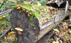 5 populiariausi mitai apie medžių priežiūrą