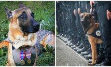 Pasaulio šunys atiduoda pagarbą žuvusiai Diesel (dešinėje)