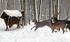 Ėdžios miške