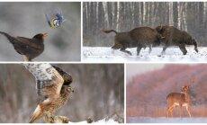 Gyvūnai žiemą