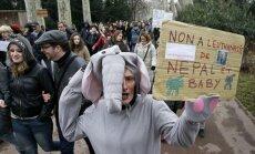 Prancūzijoje protestuojama dėl ketinimų užmigdyti du dramblius